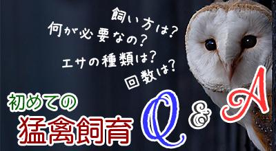猛禽飼育Q&A