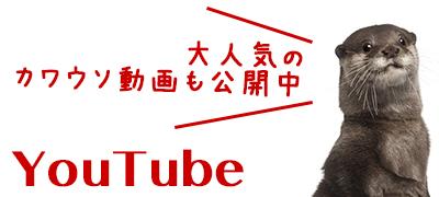 アニプラ公式youtube