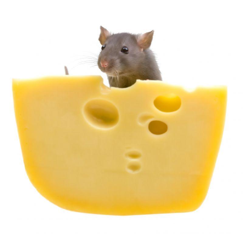 冷凍マウスの入荷状況について