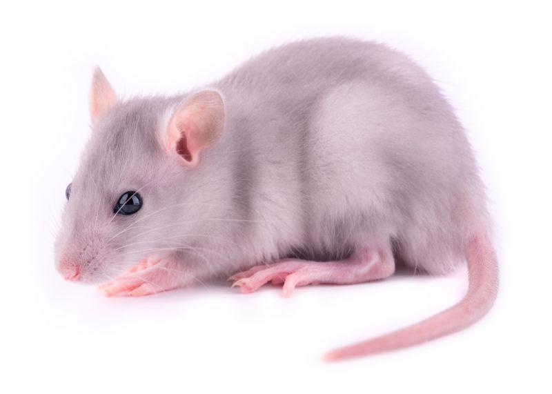 冷凍マウスの入荷日が決まりました!!